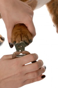 dog nail clipping ham lake mn